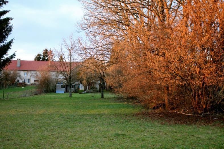 Le coucher de soleil se reflète sur les arbres et les maisons.